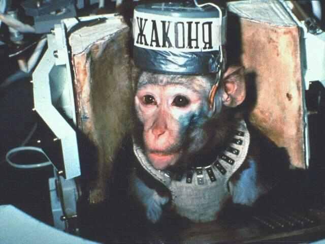 chimpanze astronaut - photo #21