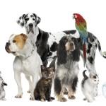 Pets: dogs, cats, birds, fish, bunnies