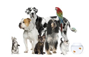 Pets: dogs, cats, birds, fish, bunnies