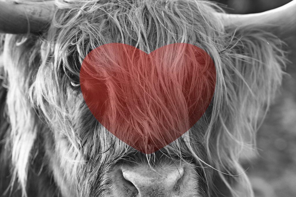 Stinky cow